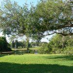 Oak Manor Scenery